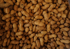 Flow Core-supported study shows why immunotherapy doesn't cure peanut allergy