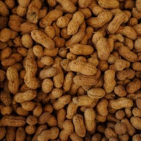 image-snapshots-peanuts